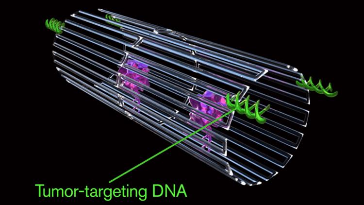 ابتكار روبوتات نانوية تدمر الخلايا السرطانية